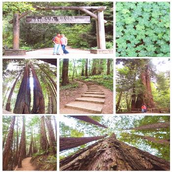 Muir Woods - How to take a Day Trip to Muir Woods from San Francisco Going to San Francisco and wan