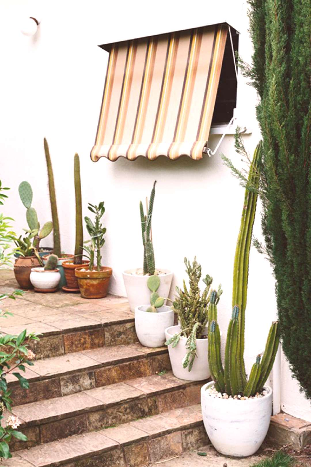 retro striped outdoor awning over stairs with potted cacti.
