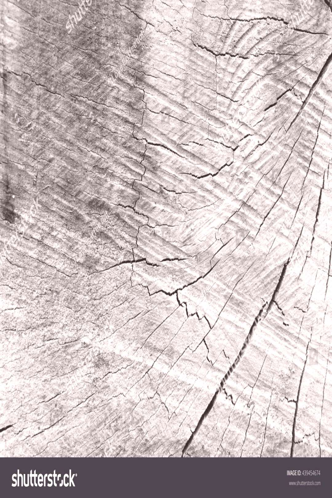 tree stump texture background with black and white style.Vintage and retro.